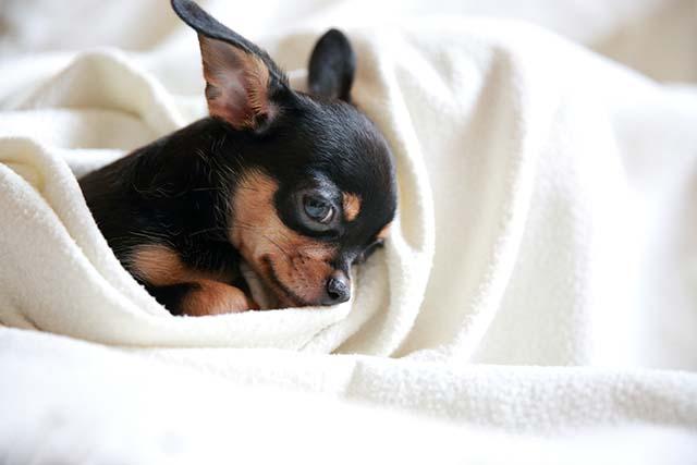 動物と飼い主様に愛のある診察を行います!
